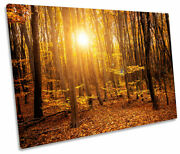 Orange Forest Sunset Trees Print Single Canvas Wall Art Picture