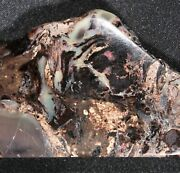 Large Slice Of Opalized Wood From Virgin Valley Nevada - 179 Ct - Opal Petrified