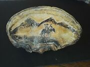 1800and039s Conch Shell Native American Tribal Hand Made Teepee Artifact Museum Find