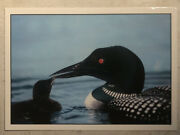 Postcard Common Loon With Chick