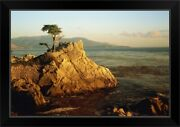Lone Cypress Tree On Rocky Outcrop At Black Framed Wall Art Print, Tree Home