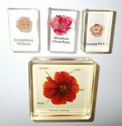 4 Flower Set A Globe Amaranth And China Rose And Chinese Pink And Cosmos Amber Clear