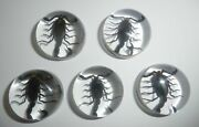 Insect Cabochon Black Scorpion Specimen Round 25 Mm Clear 100 Pieces Lot