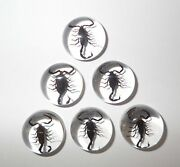 Insect Cabochon Black Scorpion Specimen Round 19 Mm Clear 100 Pieces Lot