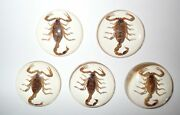 Insect Cabochon Golden Scorpion Specimen Round 35 Mm Clear 50 Pieces Lot