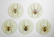 Insect Cabochon Ghost Spider Specimen 35 Mm Round Glow 50 Pieces Lot