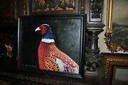 Great Pheasant Head Painting By Listed Artist