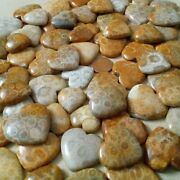 Natural Fossil Coral Cabochon Available Size 16x16 Mm To 20x20 Mm Heart Shape