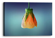 Floral Orange Abstract Flower Blue Green Canvas Wall Art Picture Home Decoration