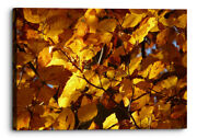 Beech Leaves Abstract Nature Orange Canvas Wall Art Picture Home Decoration