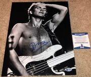 Sting Signed 11x14 Photo The Police Band Synchronicity Guitar Roxanne Bas