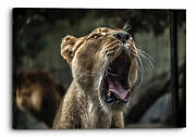 Lioness Yawning Cat Canvas Wall Art Picture Home Decor