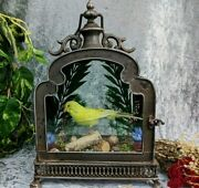 Z2d Taxidermy Oddities Curiosities Parakeet Antique Style Display Collectible