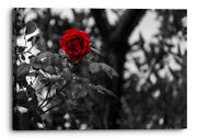 Red Rose Bush Black White Canvas Wall Art Picture Home Decor