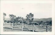Photo Animals Cattle Corral Old Graham Ranch Pleasant Valley Ar Fence