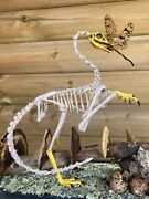 Archaeopteryx Bird Skeleton Musandeacuteum Quality Reconstituted Taxidermy.