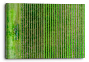 Green Farm Land Calming Nature Canvas Wall Art Picture Home Decor