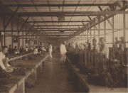 Photography / Photo Album Documenting The Cultivation Of Sumatran Tobacco 1910