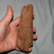 Triceratops Horn - Authentic Dinosaur Fossil - Hell Creek Formation Cretaceous
