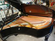 See Video - Bechstein Model V - Reconditioned - 1903 - Inc. Local Delivery