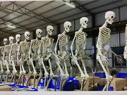 Giant Skeleton 12 Ft W/ Animated Lcd Eyes Halloween Prop - Un Opened 2021 Edtn