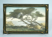 Bat Wing Frame And Hand Tinted Photograph Monterey Cypress Tree California As Is