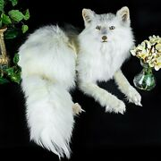 Br42 Taxidermy Oddities Curiosities White Ranch Fox Mount Display Collectible