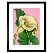 Calla Lilly Painting Art Print Framed Poster Wall Decor