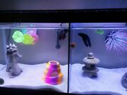 Aqueon 10 Gallon Fish Tank Divider No Suction Cups Required