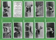 Cigarette Cards Champion Dogs 1938 Set By Sinclair