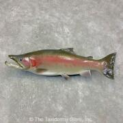 21459 P | 32 Reproduction Steelhead Taxidermy Mount For Sale