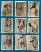 Tobacco Cigarette Cards Set 1928 Game Birds And Wild Fowl Partridgegoose Duck