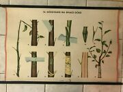Original Vintage Pull Down School Charts Cleavage Behind The Bark 12 X Posters