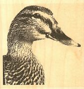 Mallard Duck Wood Mounted Rubber Stamp Impression Obsession F16162 New