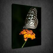 Butterfly Sitting On The Flower Stamp Box Canvas Print Wall Art Picture
