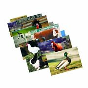 Stages Learning Farm Animal Posters Real Photo Classroom Decorations For Pres...