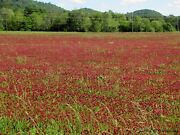 Crimson Red Clover Seed Food Plot Seed 5 Lbs 21.99 More Options