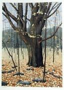Helen Rundell Old Oak Lithograph Signed And Numbered In Pencil