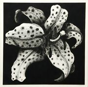Lowell Blair Nesbitt Spotted Lily On Black Etching Signed And Numbered In Pen