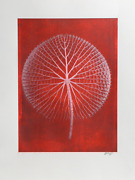 Jonathan Singer Giant Pink Waterlily On Red Digital Photograph Signed