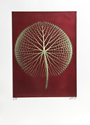 Jonathan Singer Giant Green Waterlily On Red Digital Photograph Signed