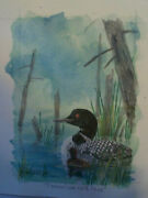 Common Loon With Chick By Canadian Nature Artist Robert Halstead - 5 X 7 2010