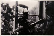 1950s Handsome Man W/ Plants Silhouette Light Abstract Odd Old Russian Photo Gay