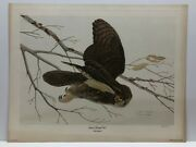 John A. Ruthven Great Horned Owl Limited Edition - 417/1000 - Signed