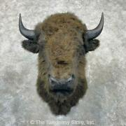 24412 E | Reproduction Bison Taxidermy Shoulder Mount For Sale