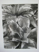 Bo Kass Leaves Landscape Nature Photography Gelatin Silver Print Listed American