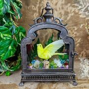 Z2ktaxidermy Oddities Curiosities Parakeet Antique Style Display Collectible