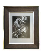 Don Worth Begonia Olsoniae Mill Valley 1973 Gelatin Silver Print Hand Signed