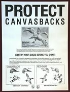 """Rare Vintage 1986 Genuine Protect Canvasbacks Poster 18"""" X 24"""" Duck Hunting"""