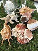 Wholesale 50 Mixed Seashells Knobby Starfish, Muffin Land Snail, Clam, Conch